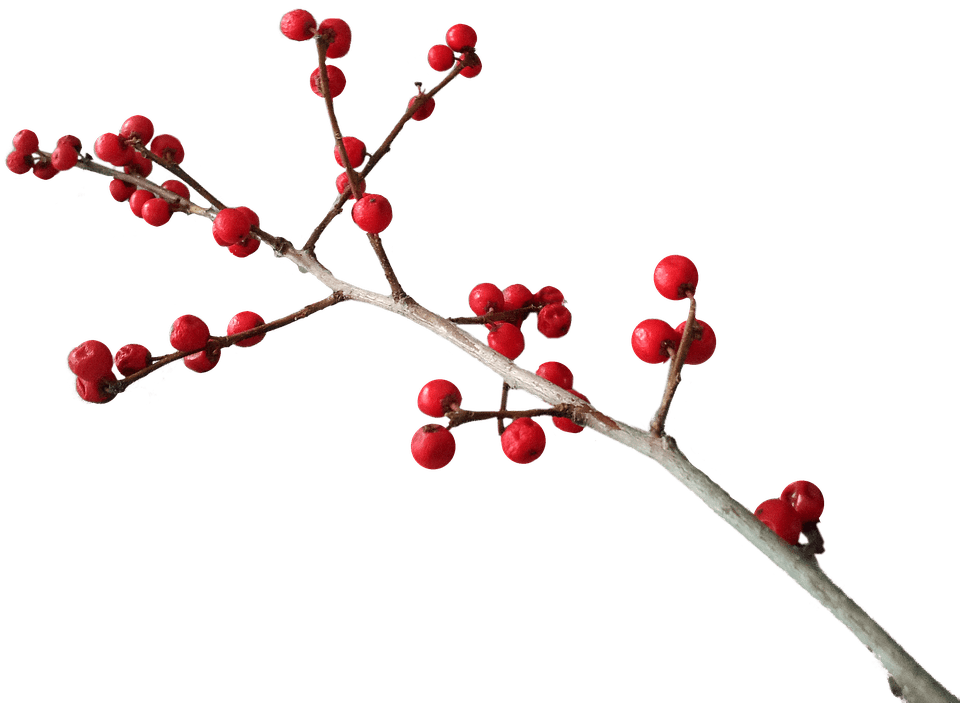 Christmas Branch Png.Christmas Branch Decoration Transparent Png Stickpng