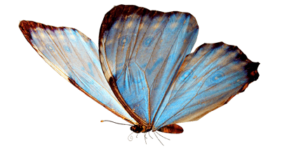 Butterfly Flying transparent PNG - StickPNG