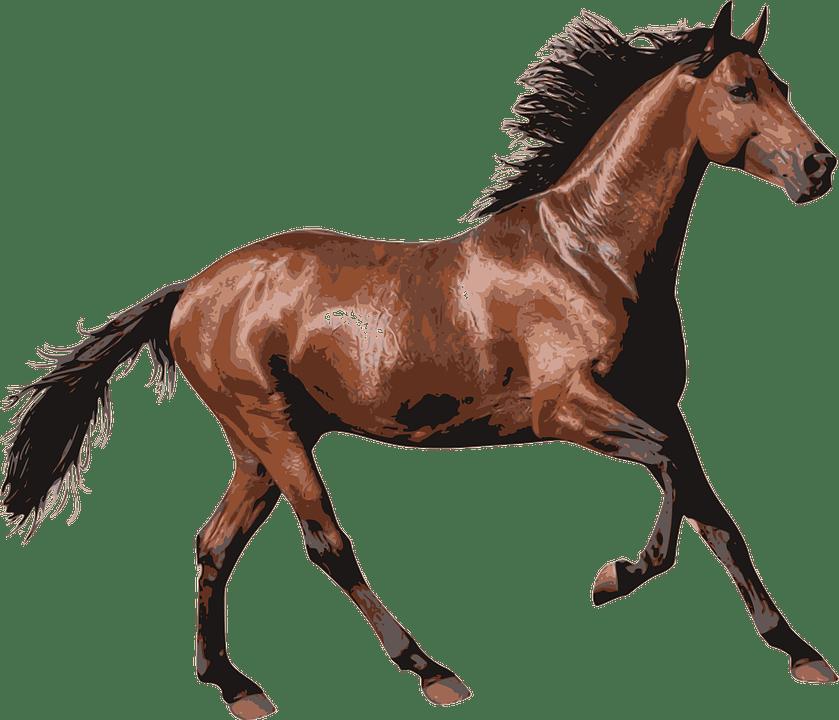 brown race horse transparent png stickpng Ladder Ball Clip Art Board Game Clip Art