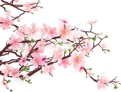 Japanese Flowers on Tree transparent PNG , StickPNG