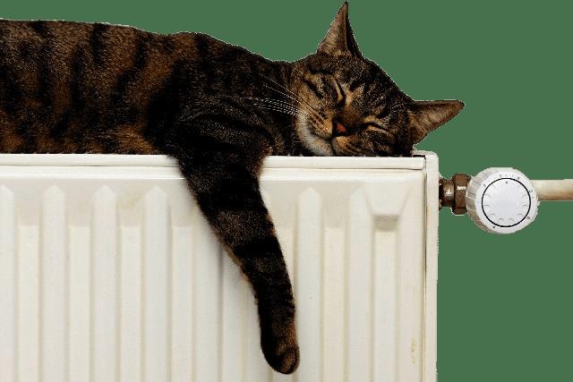 """Résultat de recherche d'images pour """"chat sur radiateur"""""""