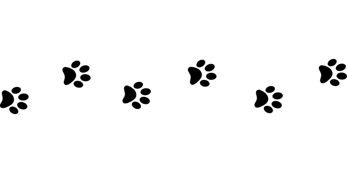 Line Of Paw Prints Transparent Png Stickpng