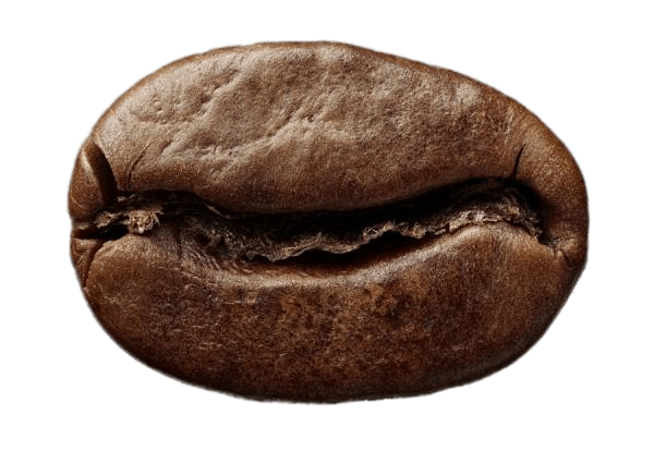 Single Roasted Coffee Bean transparent PNG - StickPNG