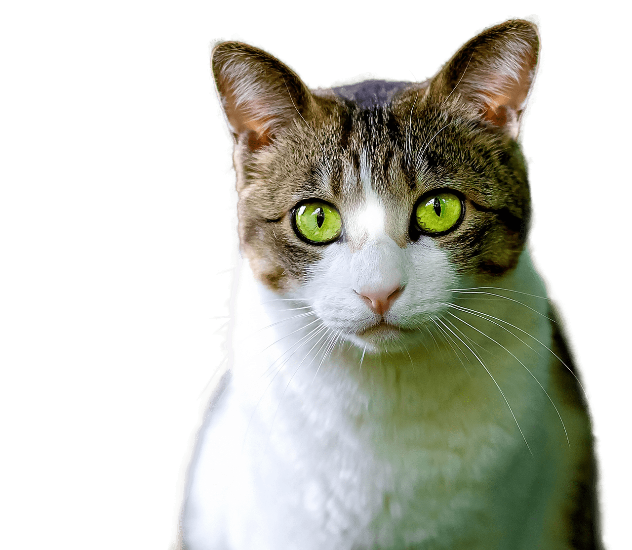 Cat Green Eyes Transparent Png Stickpng