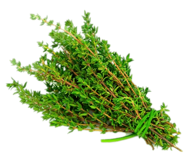 Thyme Transparent Png Stickpng