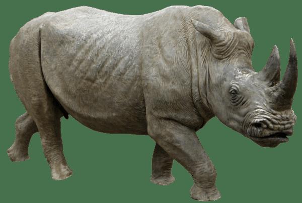 Rhino Running transparent PNG - StickPNG