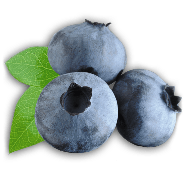 Zoom on Blueberries transparent PNG - StickPNG