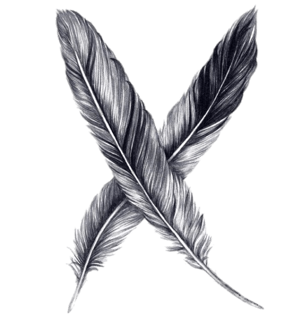 feathers drawing transparent png stickpng