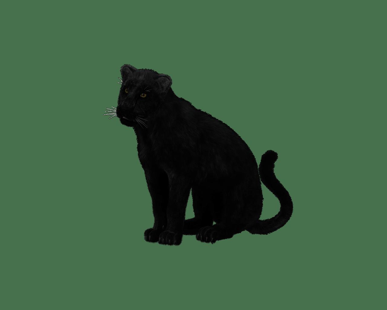 Black panther sitting