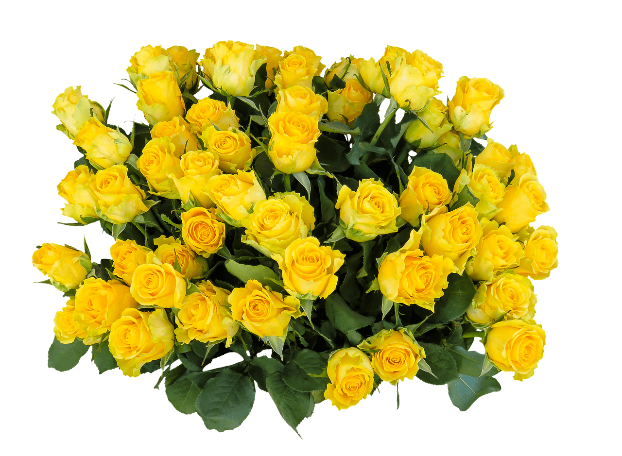 Bunch Of Yellow Roses Transparent Png Stickpng