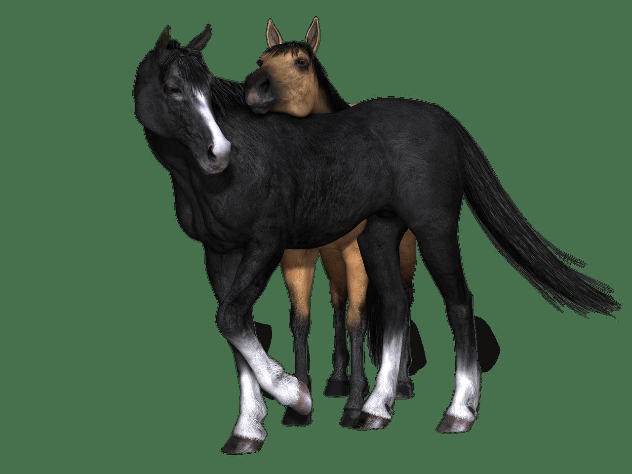 Horses Black Horse Looking Back Transparent Png Stickpng