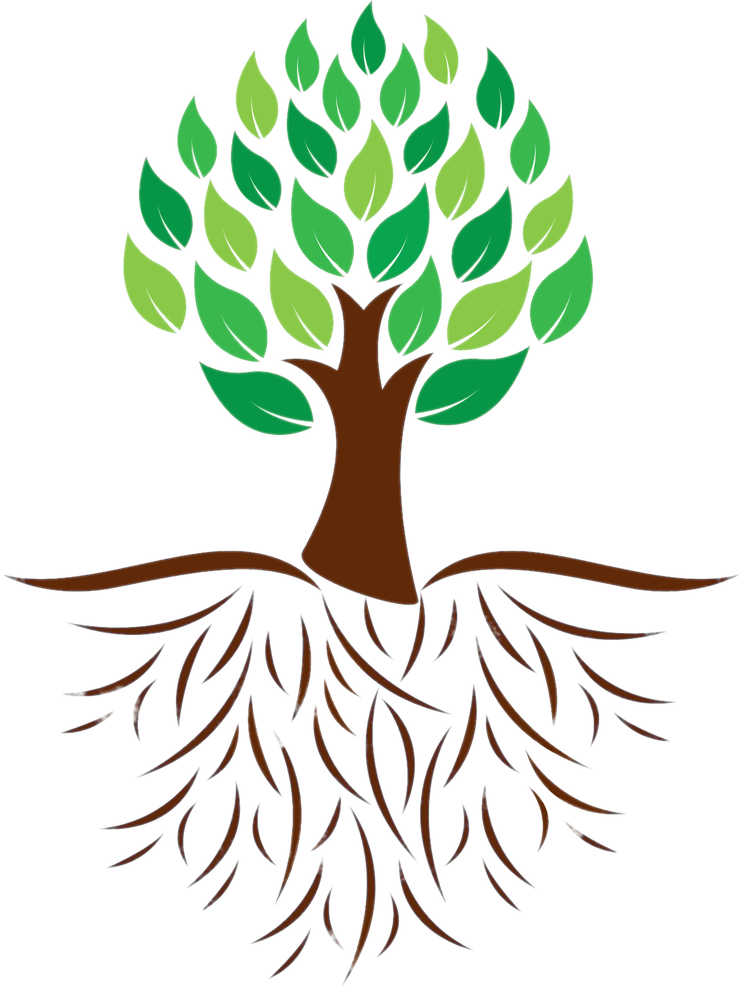Tree And Roots Colour Illustration Transparent Png Stickpng