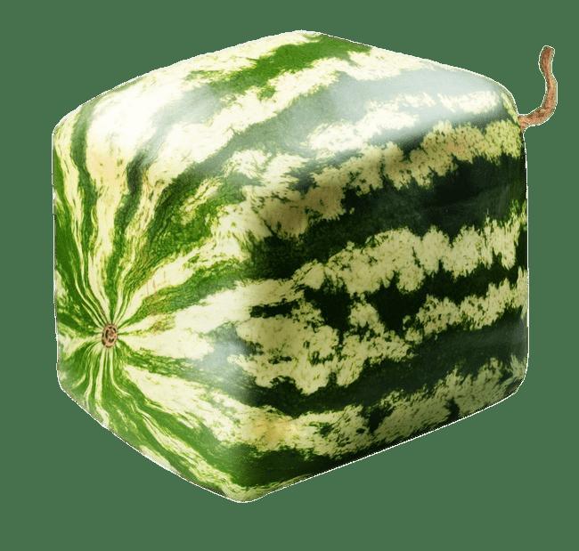 Square Watermelon Transparent Png Stickpng