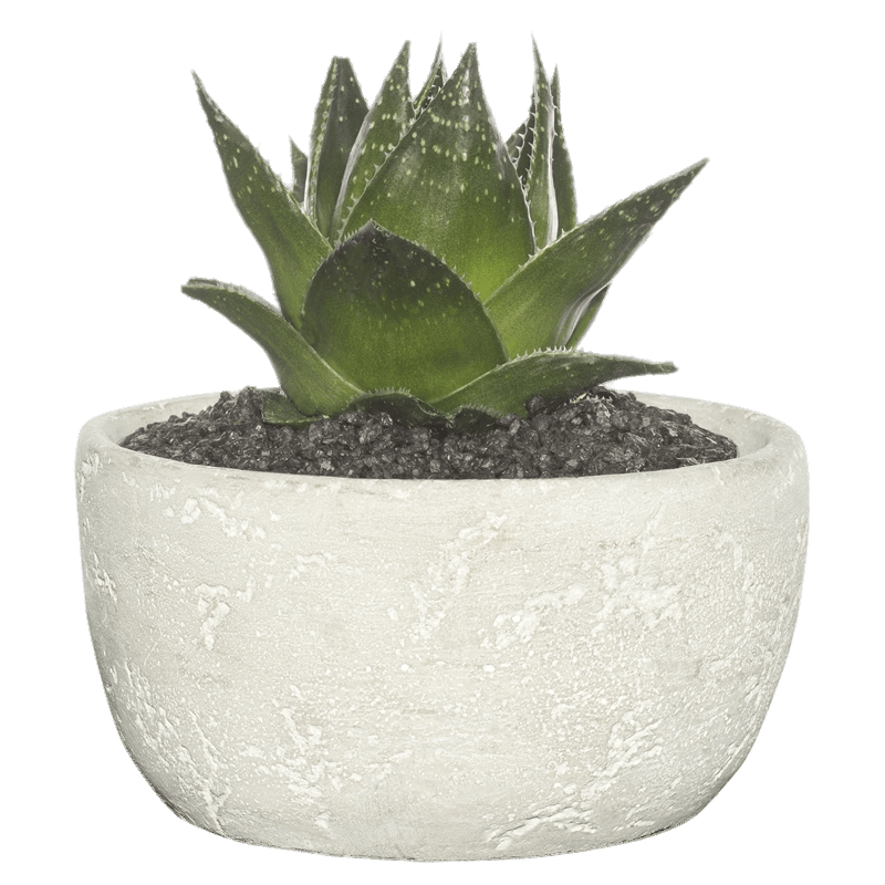 Succulent In Cement Bowl transparent PNG - StickPNG