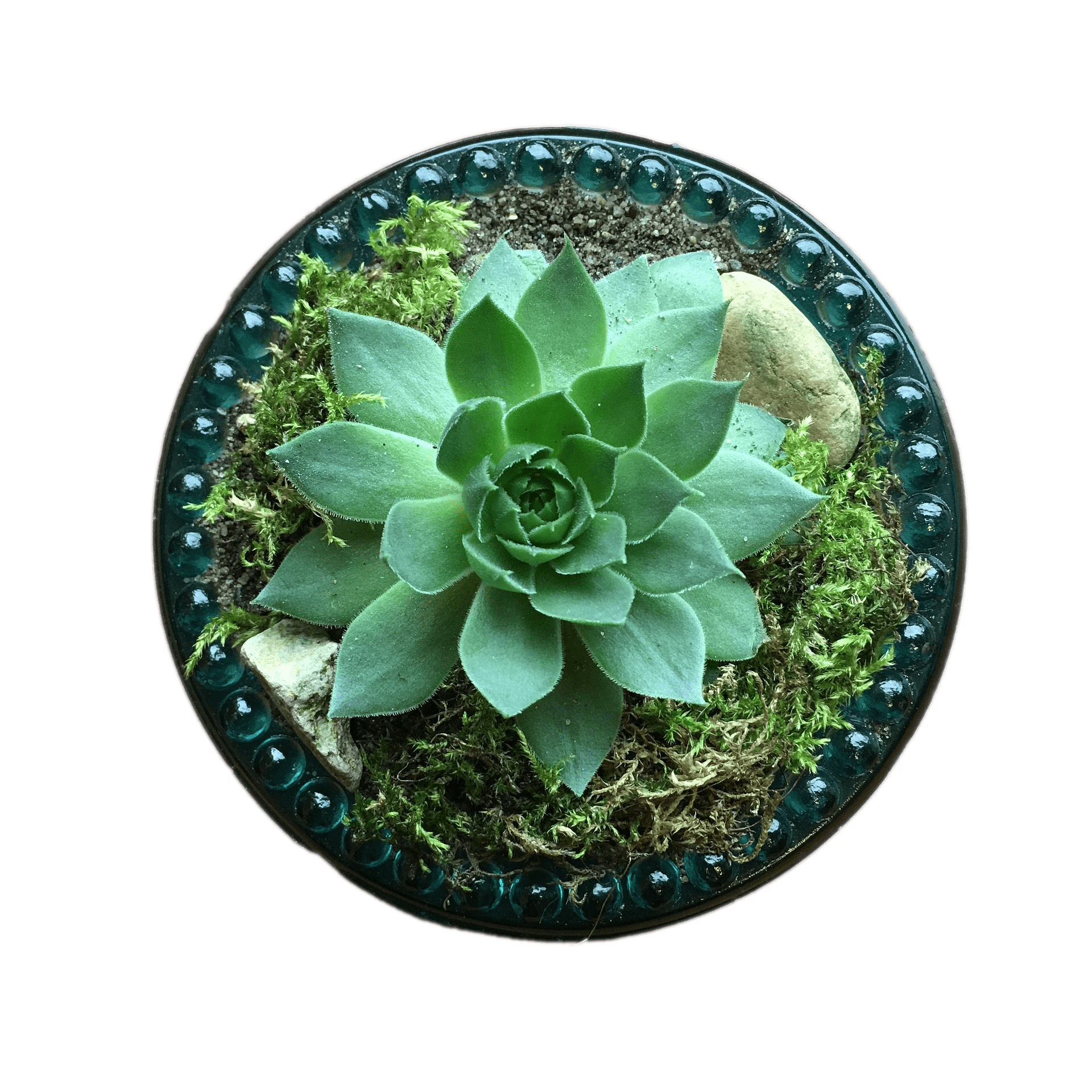 Succulent Top View transparent PNG - StickPNG