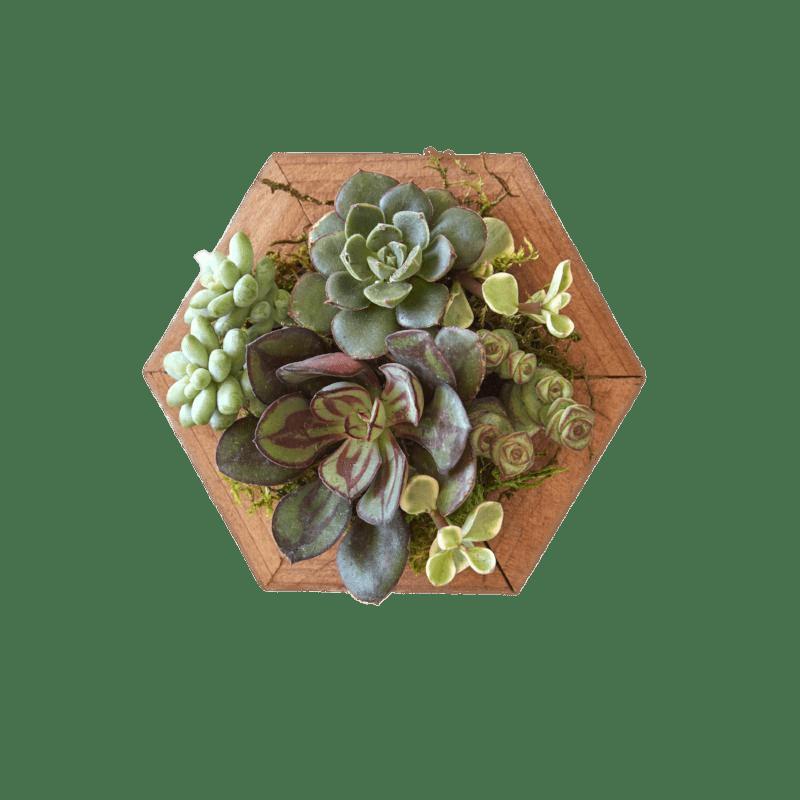 Succulents on Wooden Base transparent PNG - StickPNG