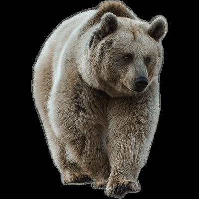 Dancing bear adult - 5 6