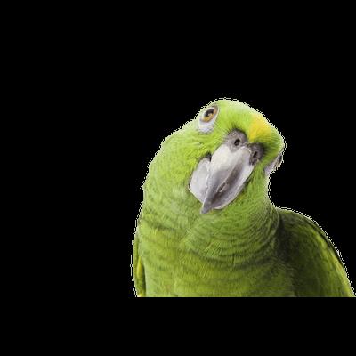 Parrots transparent PNG images - StickPNG