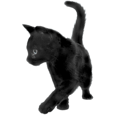 A Friendly Black Cat Meaning