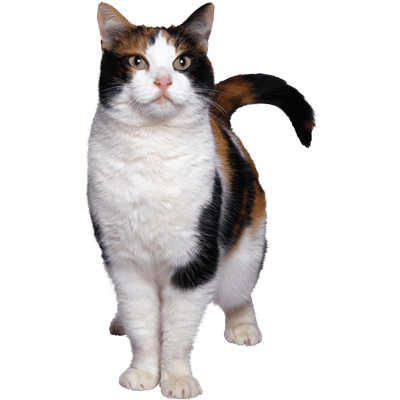 Cat Kitten Cute transparent PNG - StickPNG