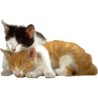 Cat Playing Back transparent PNG - StickPNG