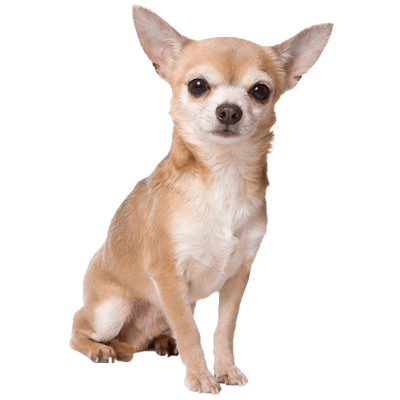 Dogs Transparent Png Images Stickpng