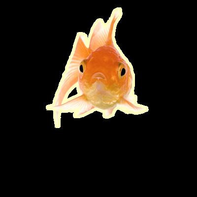 Fish Transparent Png Images Stickpng