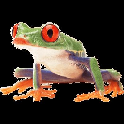 Transparent frog tumblr