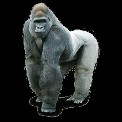 gorilla close up transparent png stickpng seating clip art seating clip art