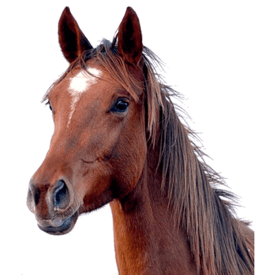 Brown Horse Head Transparent Png Stickpng
