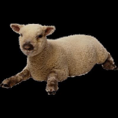 Three sheep - photo#49
