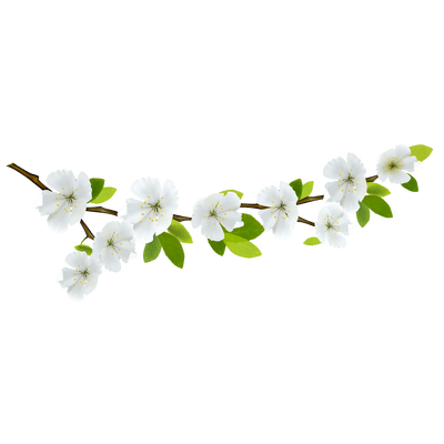 Branch Deco Left transparent PNG - StickPNG