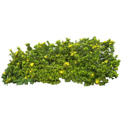 Branch And Flowers Transparent PNG