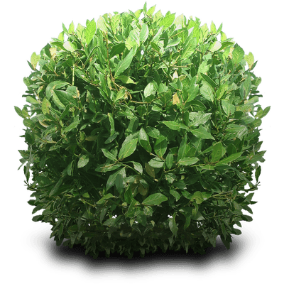 Green Bush transparent PNG - StickPNG