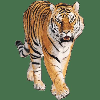 tiger jump high transparent png stickpng free tiger clipart for kids free tiger clipart pictures