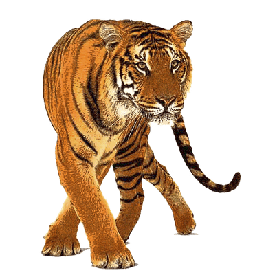 tiger jump high transparent png stickpng free blue baby footprint clipart free footprint clipart black and white