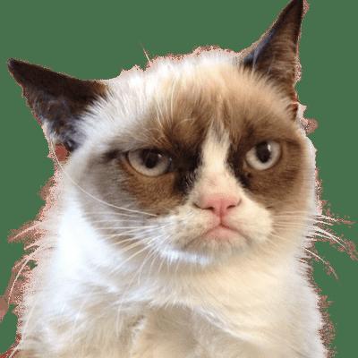 grumpy cat vector illustration transparent png stickpng