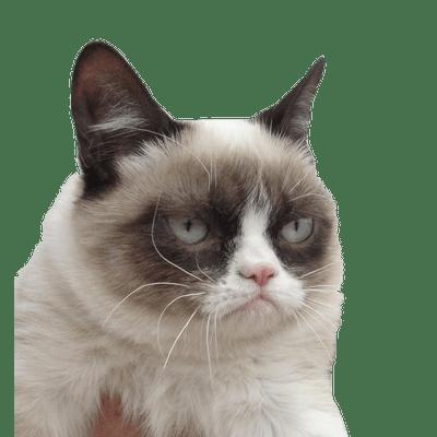 Sad Cat Meme Transparent