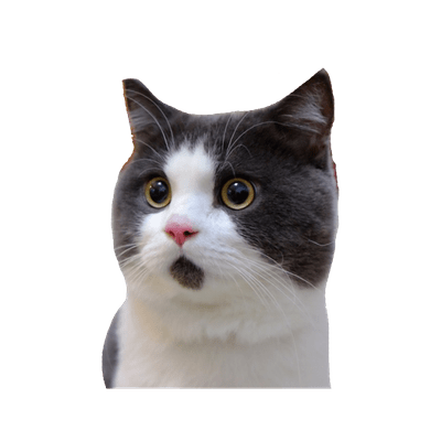 Grumpy Cat Free Vector