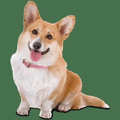 Adopt Small Dog Calgary