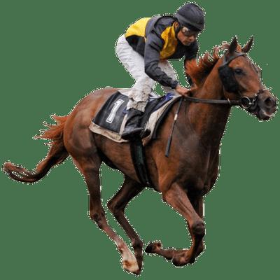 Race Horse Transparent Png Stickpng