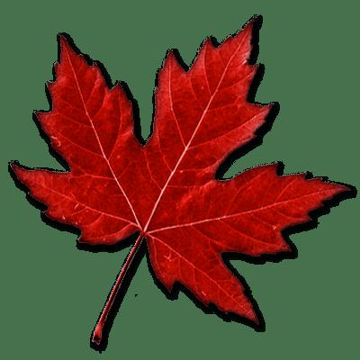 Canadian Maple Leaf Transparent Png Stickpng