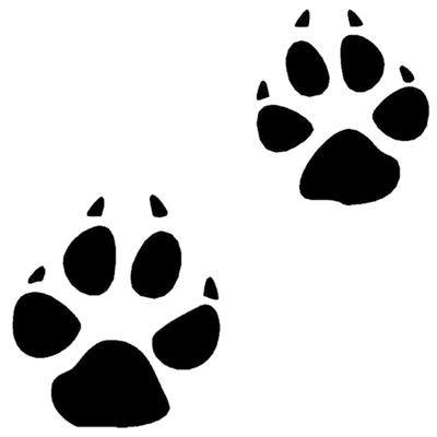 Paw Prints Transparent Png Images Stickpng Pin the clipart you like. stickpng