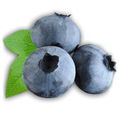 Blueberries Drawing transparent PNG - StickPNG