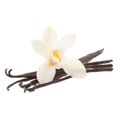 Vanilla Bean Flower transparent PNG - StickPNG