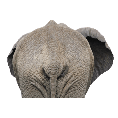 Elephants Transparent Png Images Stickpng Polish your personal project or design with these elephant trunk transparent png images, make it even more personalized and more attractive. stickpng