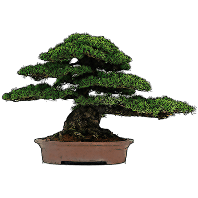 Bonsai Drawing Transparent Png Stickpng