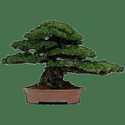 Bonsai Tree Minecraft Bonsai Tree